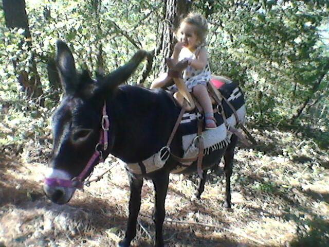 randonnée avec un âne en famille