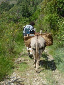 randonnée avec un âne