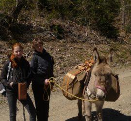 Balade contée avec un âne